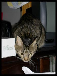コイツの猫パンチは高速です。